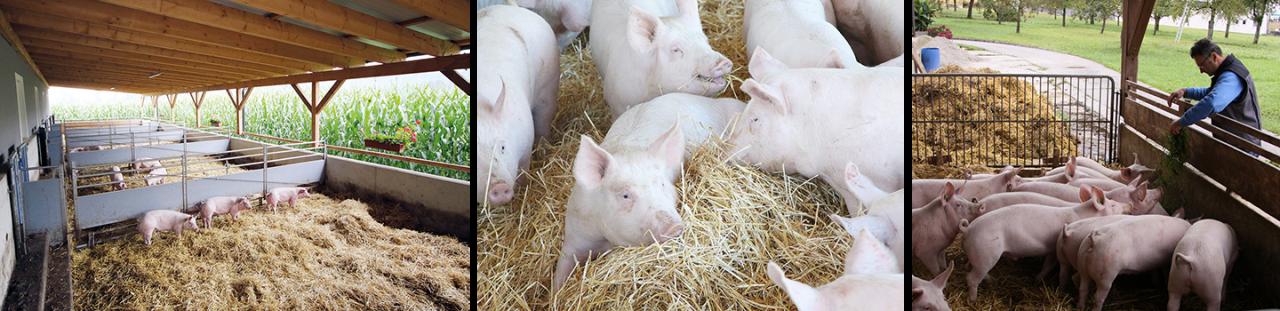 Hütthalers Hofkultur - Tierwohl fleisch und wurst